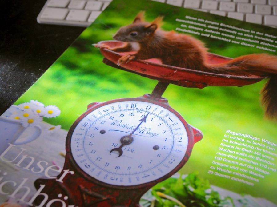 Mein Schönes Land Anleitungen habes architektur eichhörnchenhaus